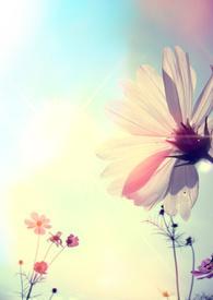 攝影:《花與光的邂逅》