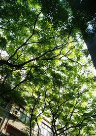 【B類】陽光灑落的午後
