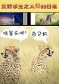 荒野求生之大貓的日常(BL)