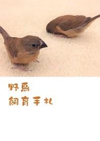 野鳥飼育手札