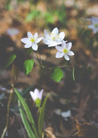 在你面前有春天(短篇)