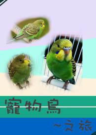 寵物鳥之旅