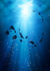 蔚藍鮪魚肚