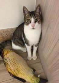 貓戰士自創同人文——小艾草的冒險
