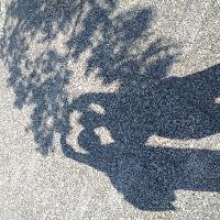光·樹·影