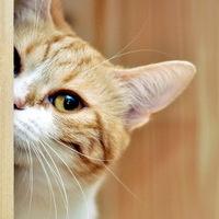 貪吃貓Meow