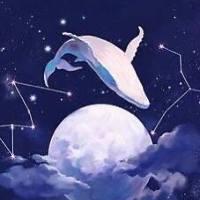一隻墜落的鯨魚
